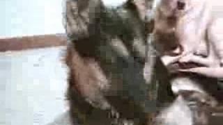 Three Dogs -- German Shepherd Mix, Yellow Lab Mix, Beagle