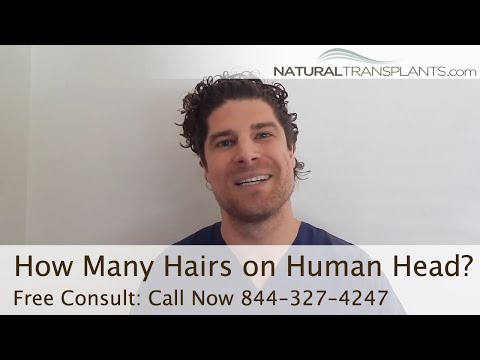How Many Hairs on the Human Head? | How Much Hair Loss is Normal?