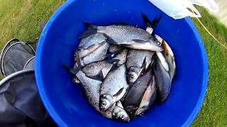 Рыбка  в процессе, солим, моем ☺☺☺ ДеНь РыБаЛкИ с Олегом Б.