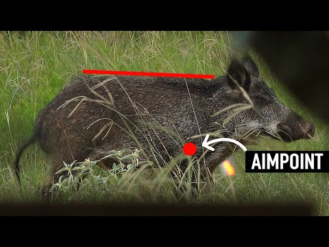 JUMPING THE STRING! - Can Fast Arrows BEAT A DEER Or PIG? 🏹 🦌
