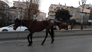 Dikkat Beygir çıkabilir ! - Burası Adalar Değil İstanbul'un Göbeği