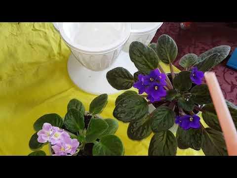 Янтарная кислота для всех цветов!