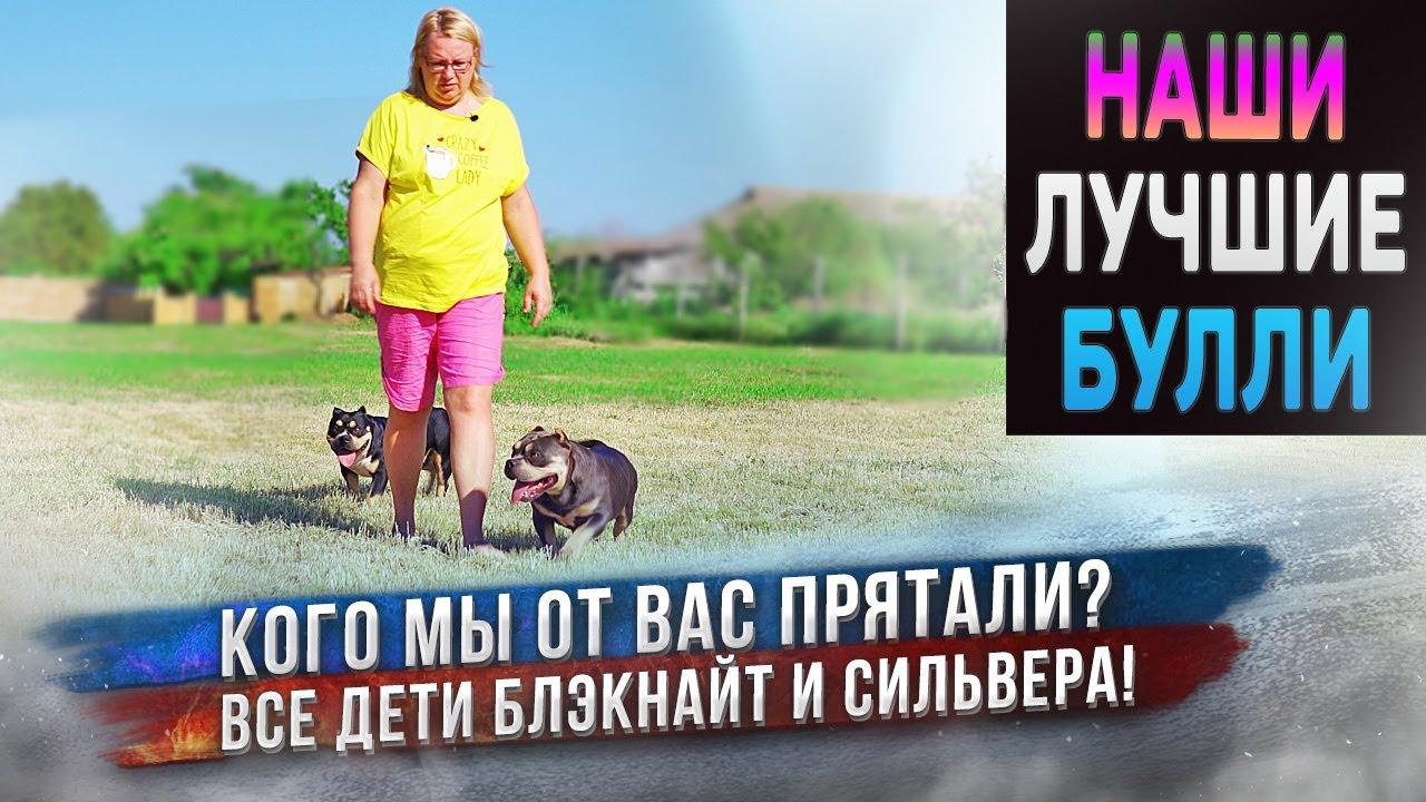 5 собак породы Американский Булли из нашего лучшего помета! Какими стали в 1,5 года? Будут плавать?