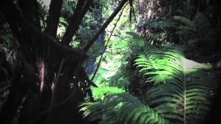 Return of the Native: Hawaii