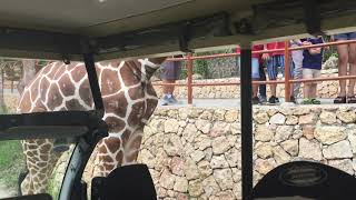 Our first close encounter with Giraffe