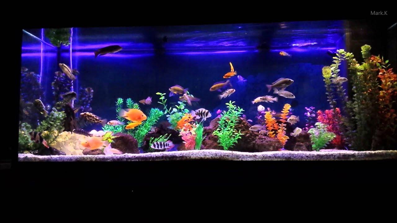 Juwel 400 aquarium 28 images juwel 400 aquarium and for Vente aquarium complet