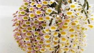 10 Loài Hoa Lan Rừng Đẹp Nhất Phân Bố Ở Tây Nguyên