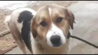 Молодая собака поездки Айтжана Алибекова  Мангыстау