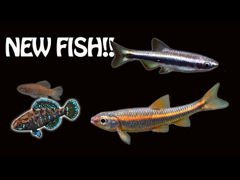 THREE New Groups Of US Native Fish!!!