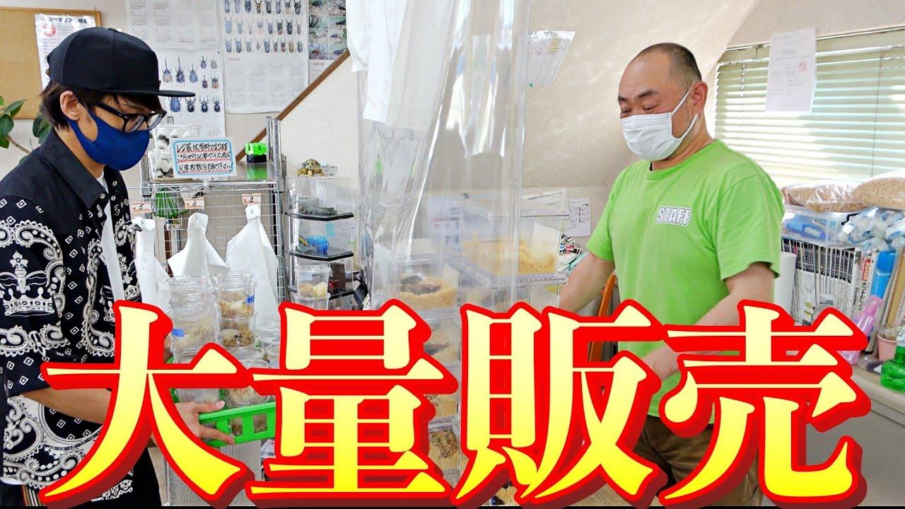 ヘラクレスオオカブトを筆頭に100匹以上の世界のクワカブ達を関東最大級の昆虫ショップに持っていきました