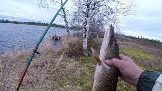 Неожиданный результат на секретном озере Отличный результат по хищнику