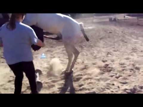 Horse Semen Collection - Artificial Insemination of MareKaynak: YouTube · Süre: 2 dakika53 saniye