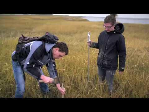 BE SAFE: flood risk reduction using vegetated foreshores