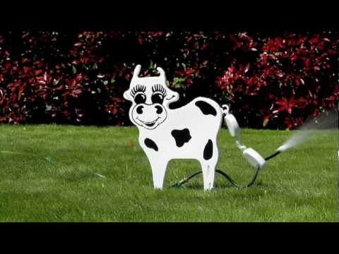 Oly Cow Lawn Ornament Sprinklers Youtube