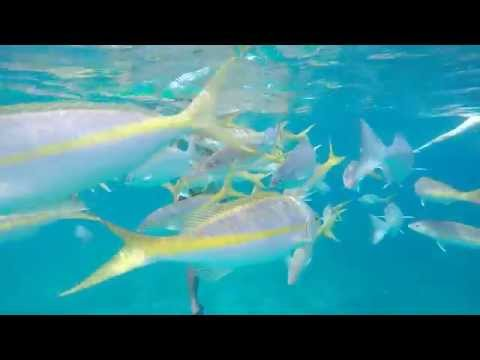 GoPro: Grand Turk Island, Turks and Caicos snorkeling swimming with sharks tour Sep 25 2015