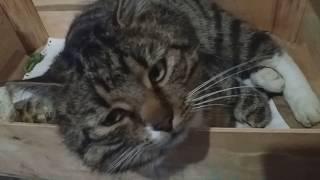 Кот спит с черепахой прикол