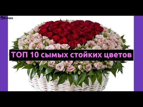 Вопрос: Если в вазу с цветами бросить лёд, цветы простоят дольше Почему?