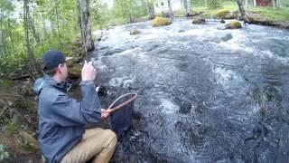 Fighting a Big Brown Trout at Läsäkoski