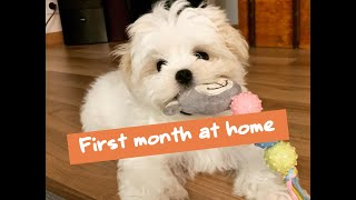 First month with a Maltese puppy | How to care for your puppy? | Cute