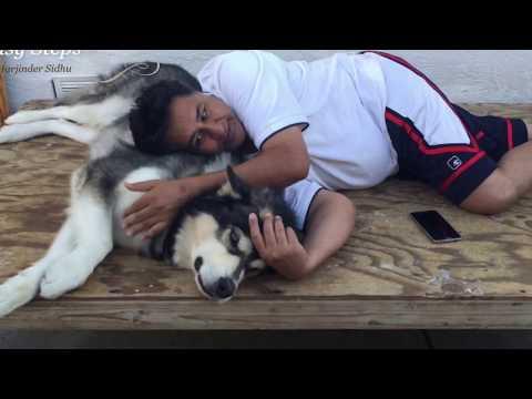 "Sleeping with my Dog ""Sheru"" the Alaskan Malamute   Sleeping with my Fury Friend"