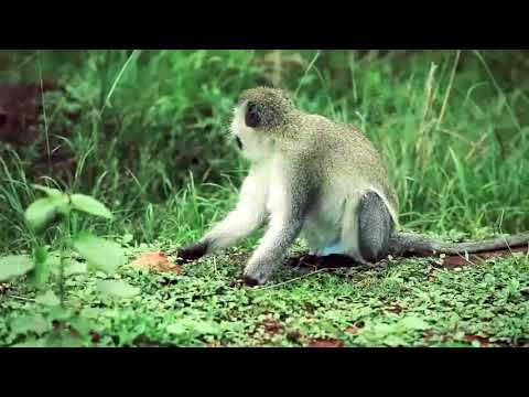 Trave Rwanda with Hermosa Life Tours and Travel