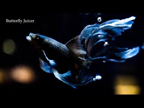 Yamato Kasai - Butterfly Juicer