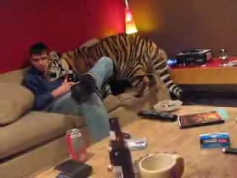 Il ragazzo che vive con una tigre in casa