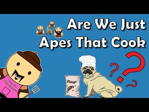 Did Cooking Make Us Smart?