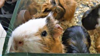 Влог Макс в зоопарке кормит животных - Видео для детей