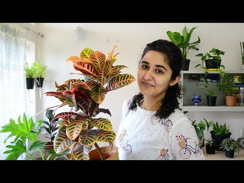 Best Indoor Plants in India for Decoration