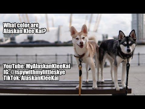 What color are Alaskan Klee Kai?
