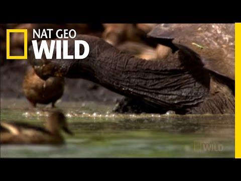 Darwin in the Galapagos  Nat Geo Wild