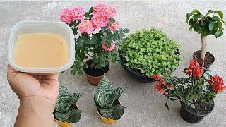 Como Enraizar Sua Planta Sem Gastar Nada