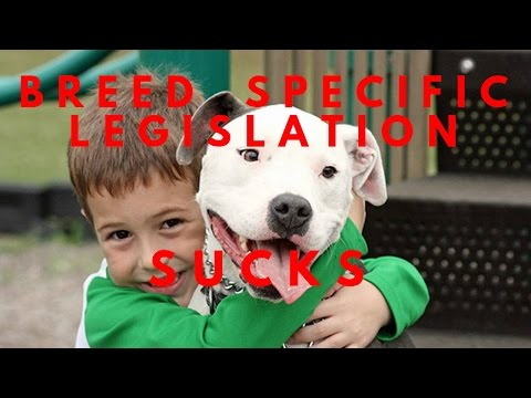 Why Breed Specific  Legislation Is Wrong