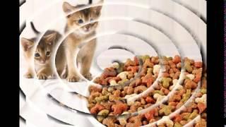 хранение сухого корма для кошек(http://urlid.ru/c17g ,Интернет-магазин Enter зоотоваров в рунете, купите заработок в Инете http://glopages.ru/affiliate/buy/2734946 , http://url..., 2014-12-22T18:39:57.000Z)