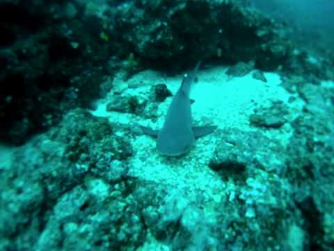 SCUBA diving with Hammerhead Sharks - Cocos Island, Costa Rica