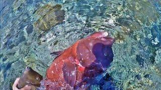 ブログも見てね!この日の 関西お魚突きhttp://ameblo.jp/osaka-osakana...
