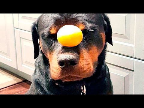 Smart Dogs doing Tricks #18 | Funny Dogs 2015