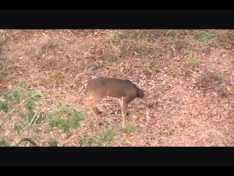 The home made deer mineral licks minutes