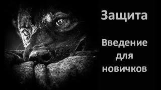 Занятия с собакой по защите. Введение для начинающих.