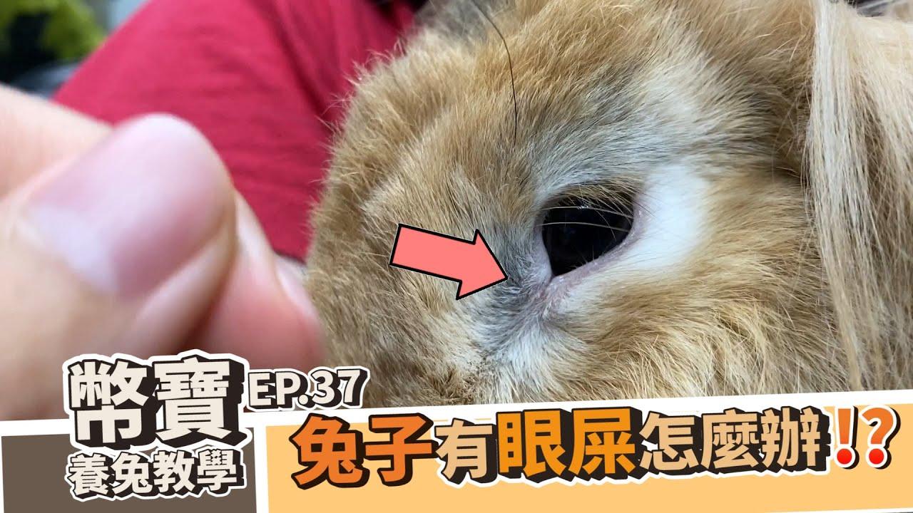 兔子有眼屎怎麼辦!?原來兔子有眼屎是因為這樣|幣寶養兔教學系列 EP.37|ChampKnows【冠軍知道】