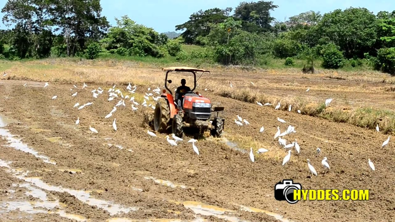 Tractor preparando la tierra para siembra de arroz youtube - Preparacion de la tierra para sembrar ...