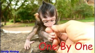 Tiny Little Baby Monkey Lizza Love To Eat Logan | Tiny and Soft Touch My Little Baby Monkey  Lizza.