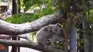 メイ&コウメ 2008年5月4日 埼玉県こども自然動物園.