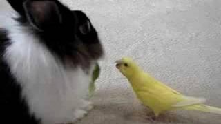 姫ちゃん(ウサギ)にピノは青梗菜を取られました。さぁ、大変!ピノの...