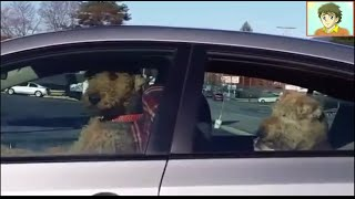 (REVIW WORLD)Impatient Pups Left Alone In Car Lay On The Horn For Their Owners' Return(Orginal video link:https://www.youtube.com/watch?v=IWwlxxaQIso Hey guys you want more reviw world videos so please suscribe my channel. %%%%Follow ..., 2016-04-12T06:08:21.000Z)
