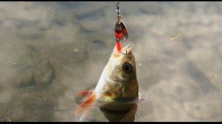 видео Ловля головля летом на спиннинг. » Сайт о рыбалке для начинающих