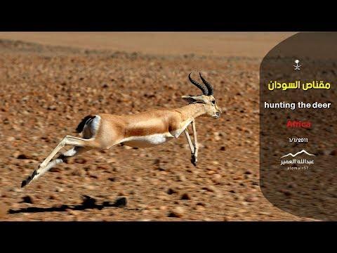 مقناص السودان.. ( عبدالله العمير )
