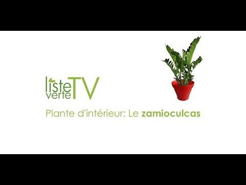 Plante d 39 int rieur le zamioculcas youtube for Plantes dinterieur