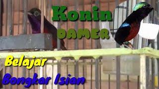 Download SUARA BURUNG KOLIBRI NINJA GACOR , BELAJAR BONGKAR ISIAN
